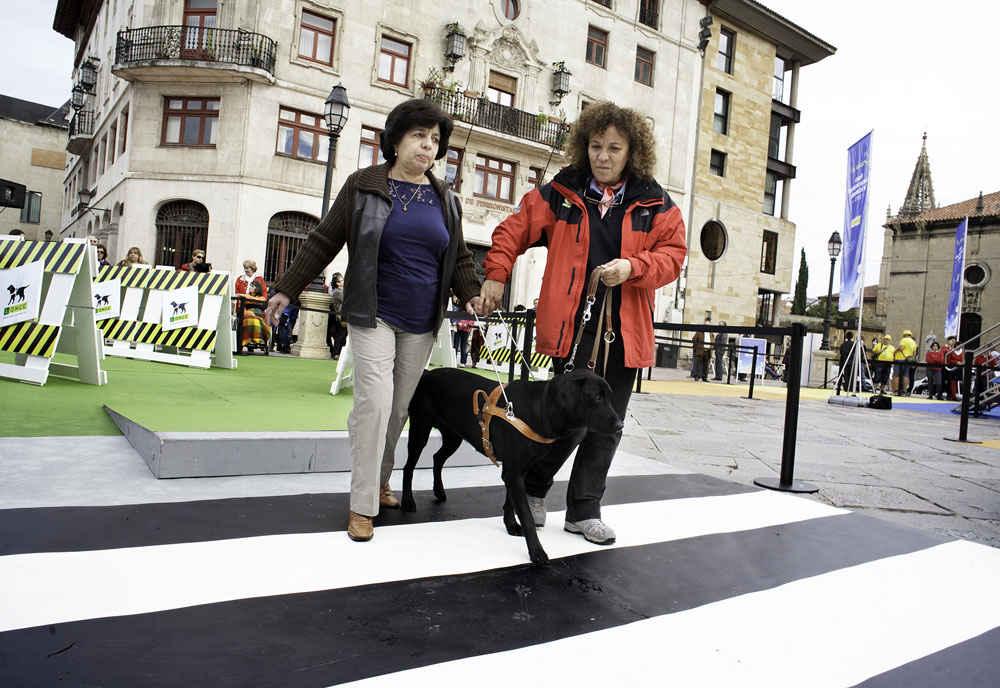 Exposición y exhibiciones de la ONCE en Oviedo